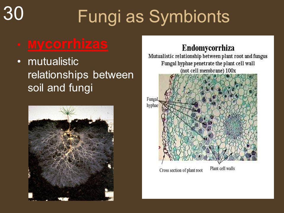 Fungi as Symbionts Mycorrhizas