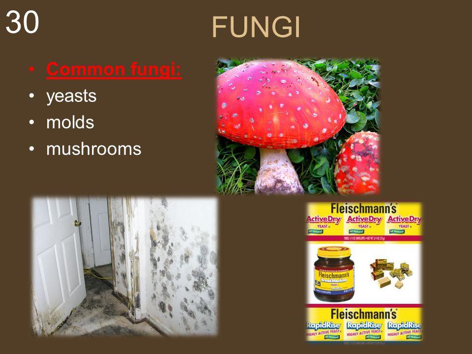 FUNGI Common fungi: yeasts molds mushrooms