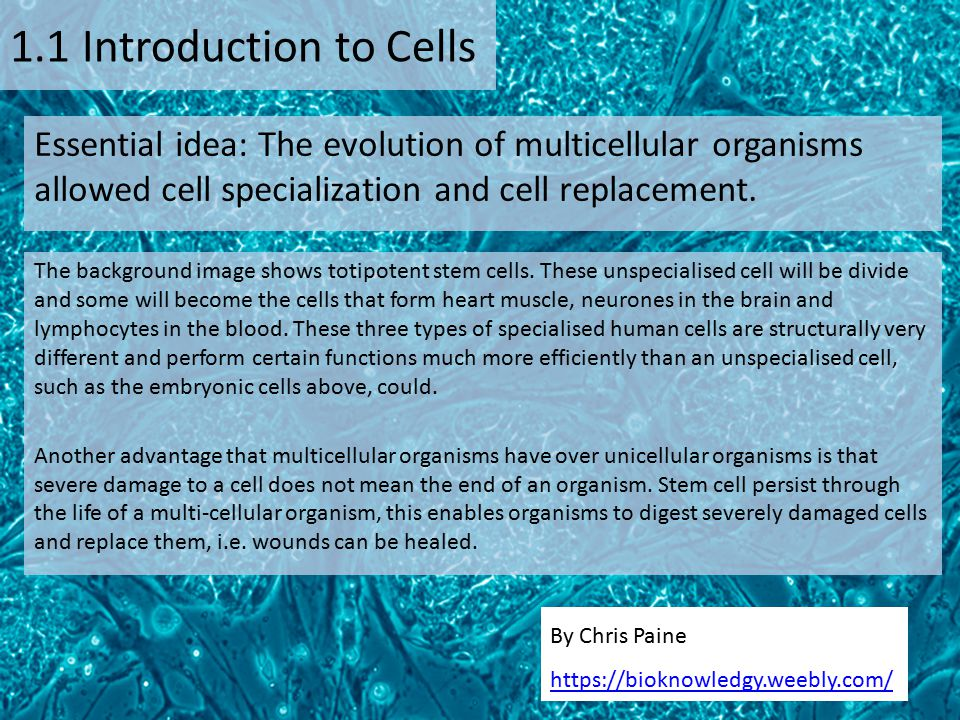 1.1 Introduction to Cells Essential idea: The evolution of multicellular organisms allowed cell specialization and cell replacement.