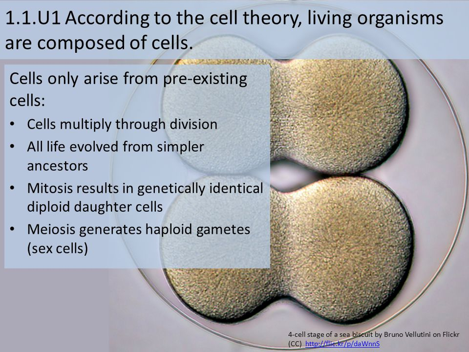 1.1.U1 According to the cell theory, living organisms are composed of cells.
