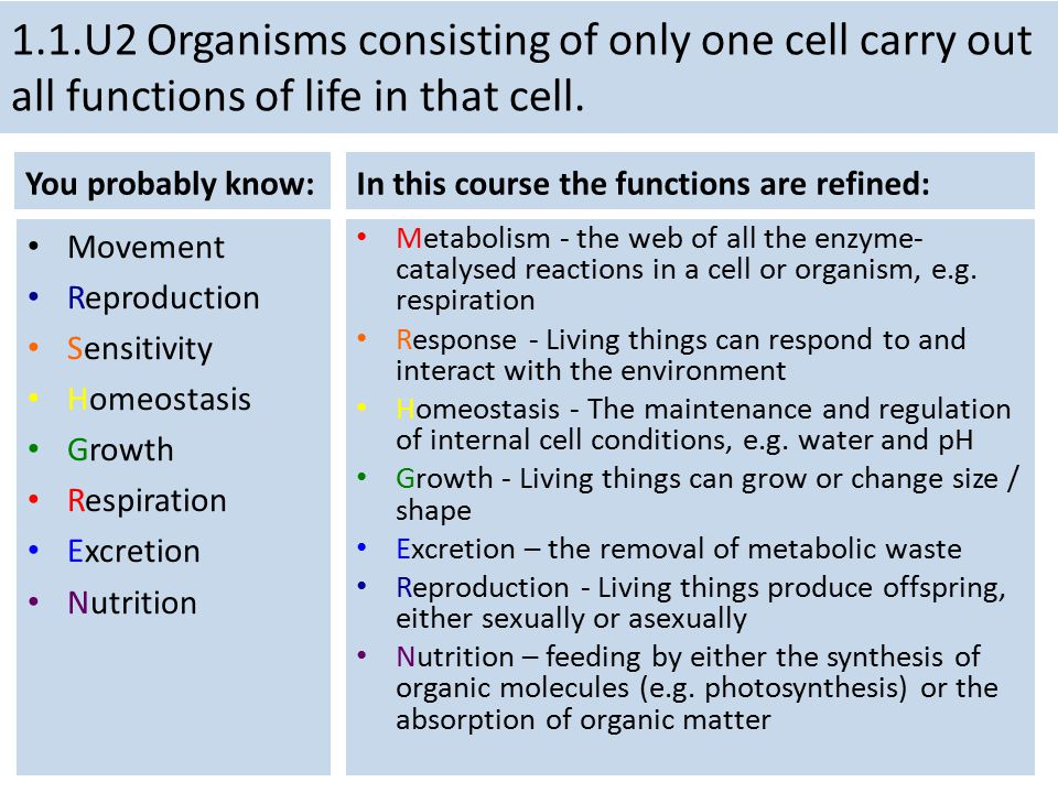 1.1.U2 Organisms consisting of only one cell carry out all functions of life in that cell.