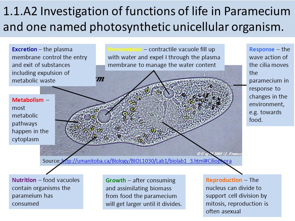 1.1.A2 Investigation of functions of life in Paramecium and one named photosynthetic unicellular organism.