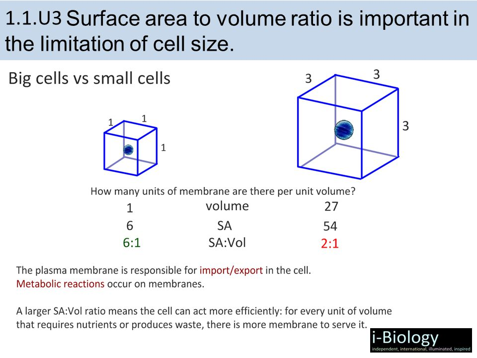 1.1.U3 Surface area to volume ratio is important in the limitation of cell size.