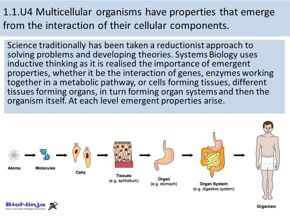 1.1.U4 Multicellular organisms have properties that emerge from the interaction of their cellular components.
