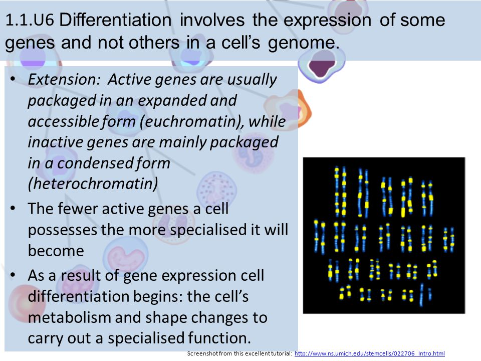 1.1.U6 Differentiation involves the expression of some genes and not others in a cell's genome.