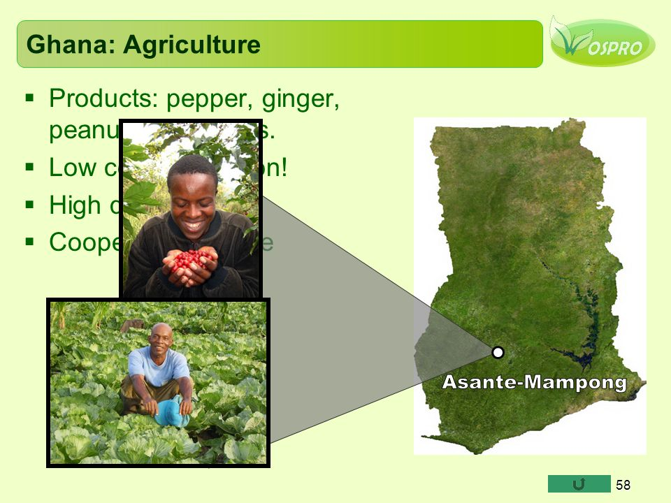 Asante-Mampong Ghana: Agriculture