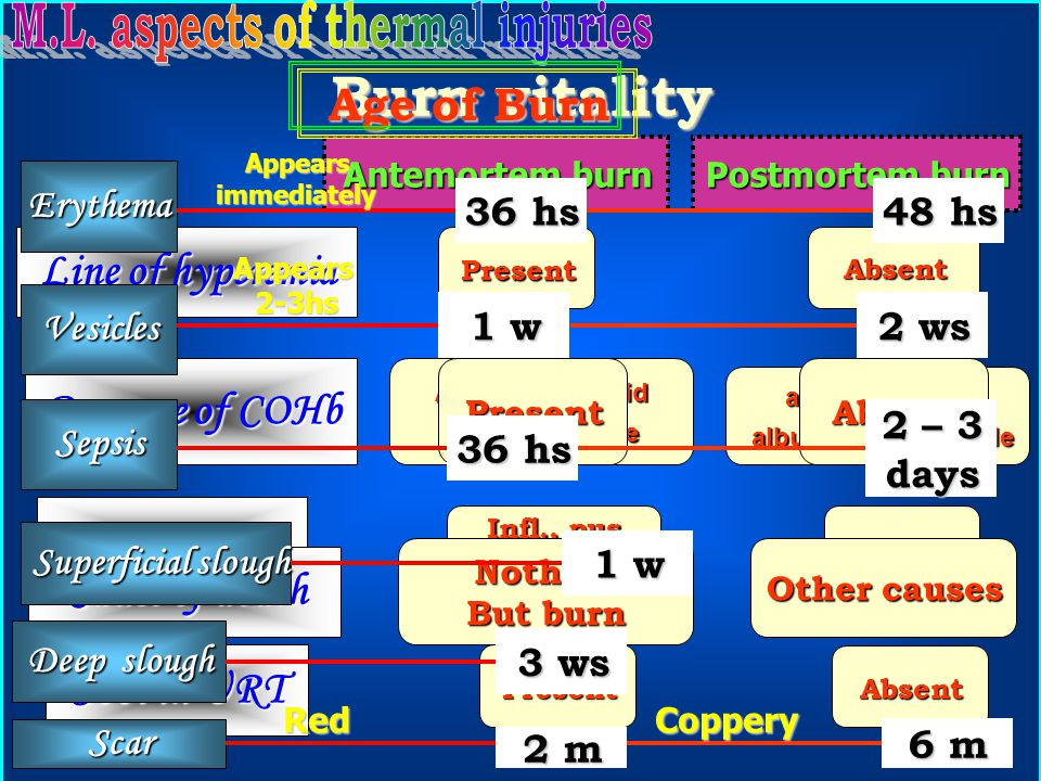 M.L. aspects of thermal injuries
