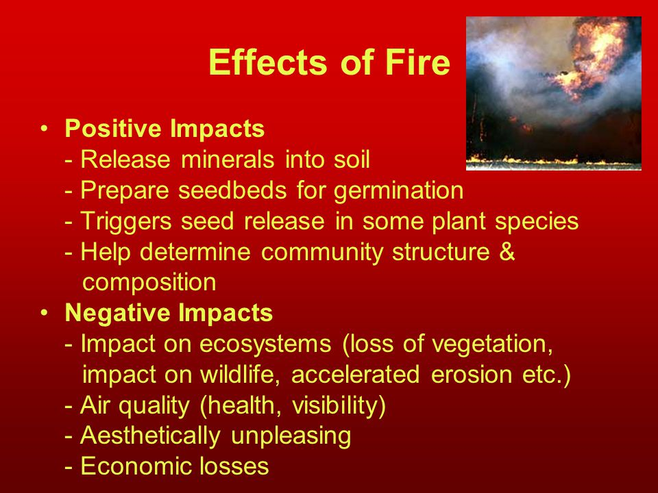 Effects of Fire Positive Impacts - Release minerals into soil