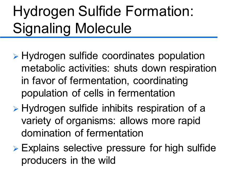 Hydrogen Sulfide Formation: Signaling Molecule