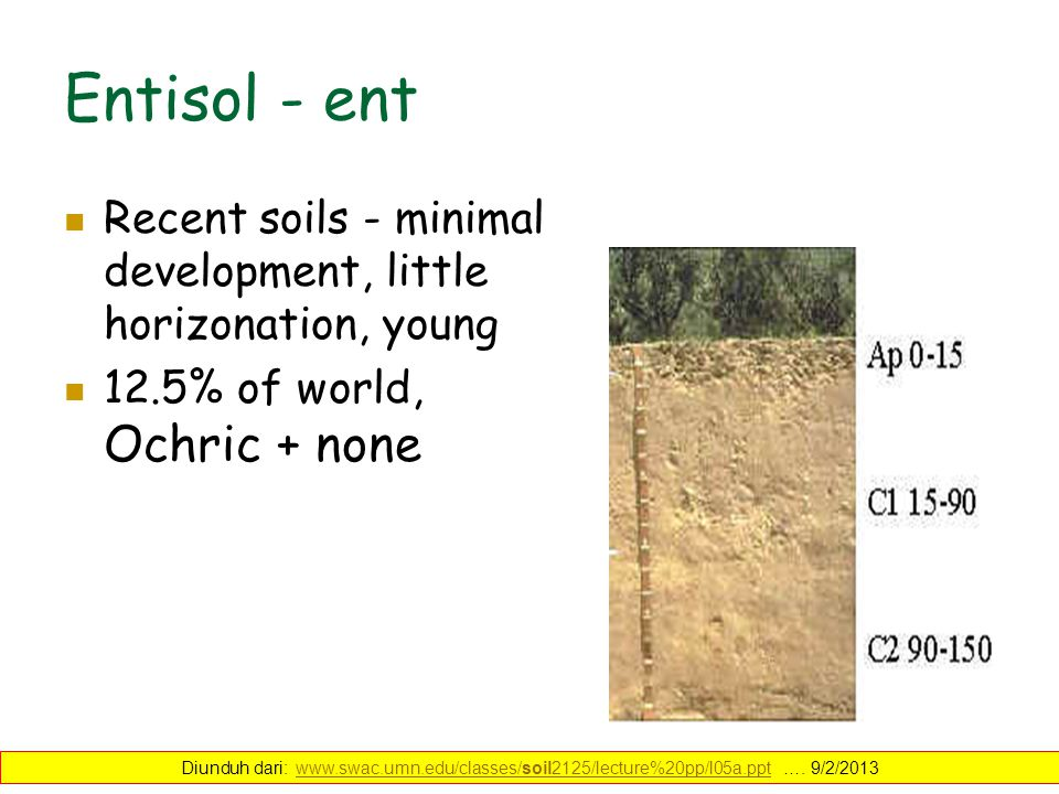 Entisol - ent Recent soils - minimal development, little horizonation, young soils.