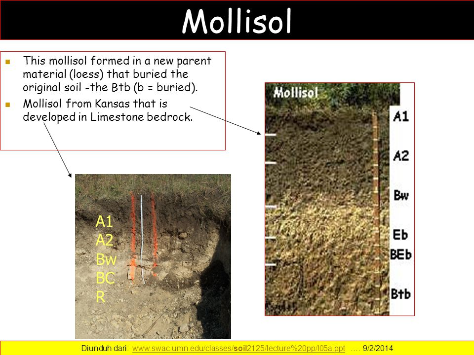 Mollisol This mollisol formed in a new parent material (loess) that buried the original soil -the Btb (b = buried).