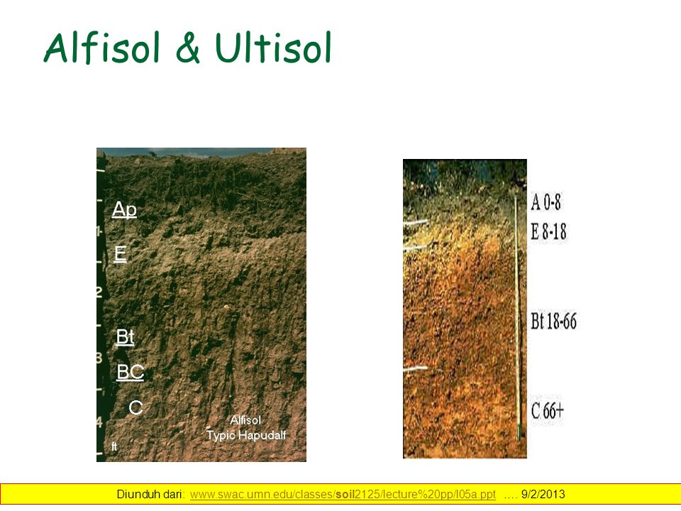 Alfisol & Ultisol Diunduh dari: www.swac.umn.edu/classes/soil2125/lecture%20pp/l05a.ppt ….