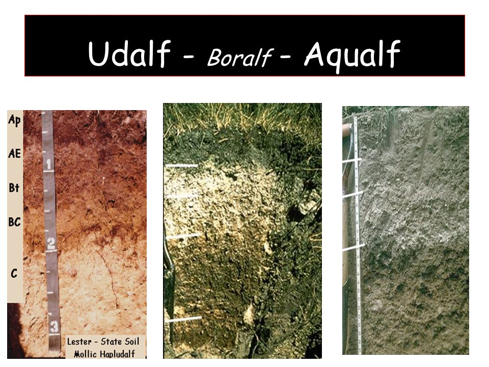 Udalf - Boralf - Aqualf