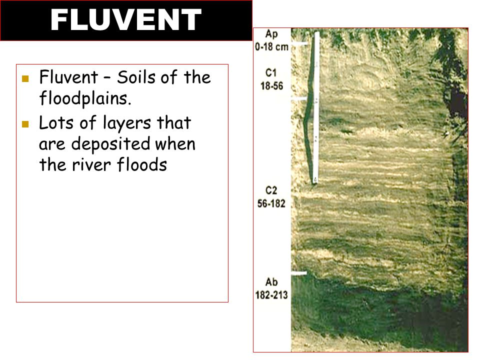 FLUVENT Fluvent – Soils of the floodplains.