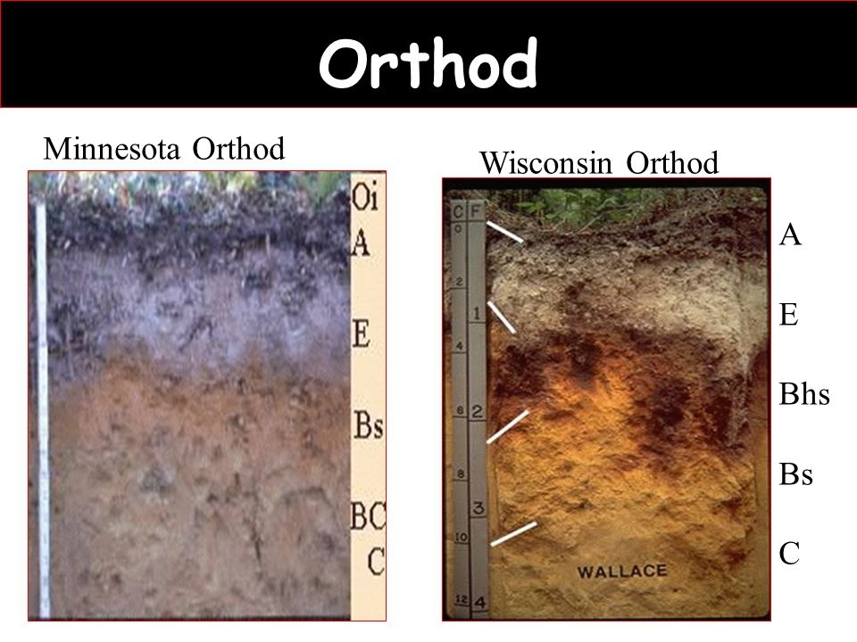 Orthod Minnesota Orthod Wisconsin Orthod A E Bhs Bs C