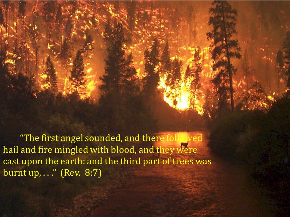 The first angel sounded, and there followed hail and fire mingled with blood, and they were cast upon the earth: and the third part of trees was burnt up, .