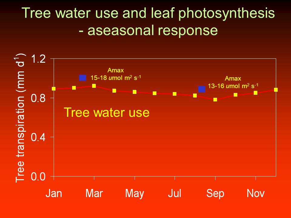 Tree water use and leaf photosynthesis - aseasonal response