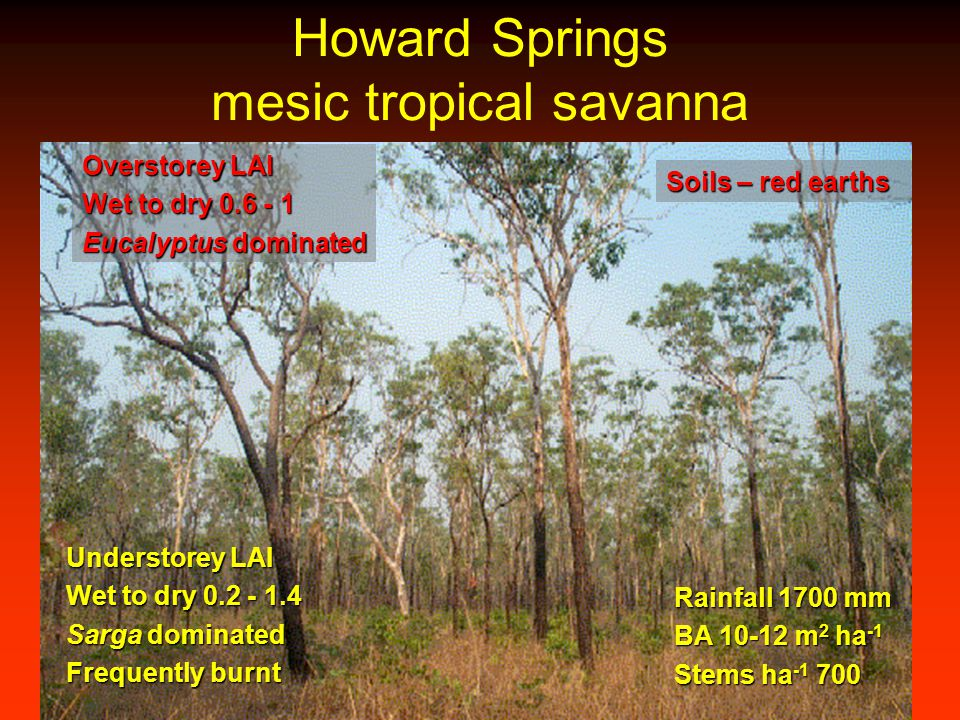 Howard Springs mesic tropical savanna