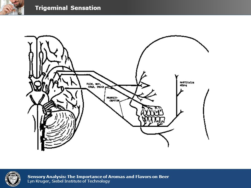 Trigeminal Sensation