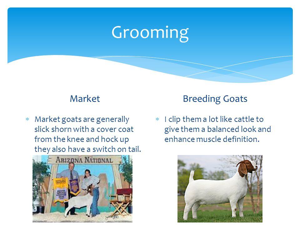 Grooming Market Breeding Goats