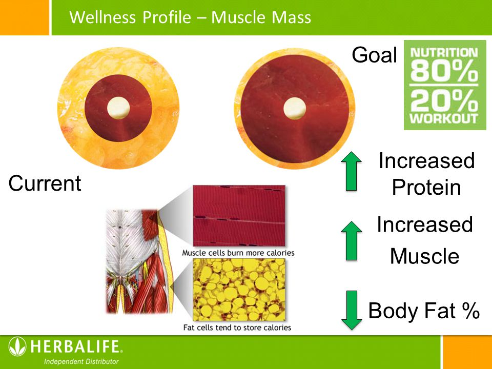Goal Increased Protein Current Increased Muscle Body Fat %