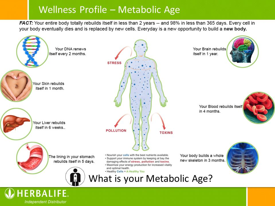 Wellness Profile – Metabolic Age