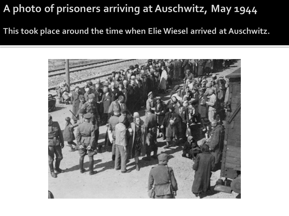 A photo of prisoners arriving at Auschwitz, May 1944 This took place around the time when Elie Wiesel arrived at Auschwitz.