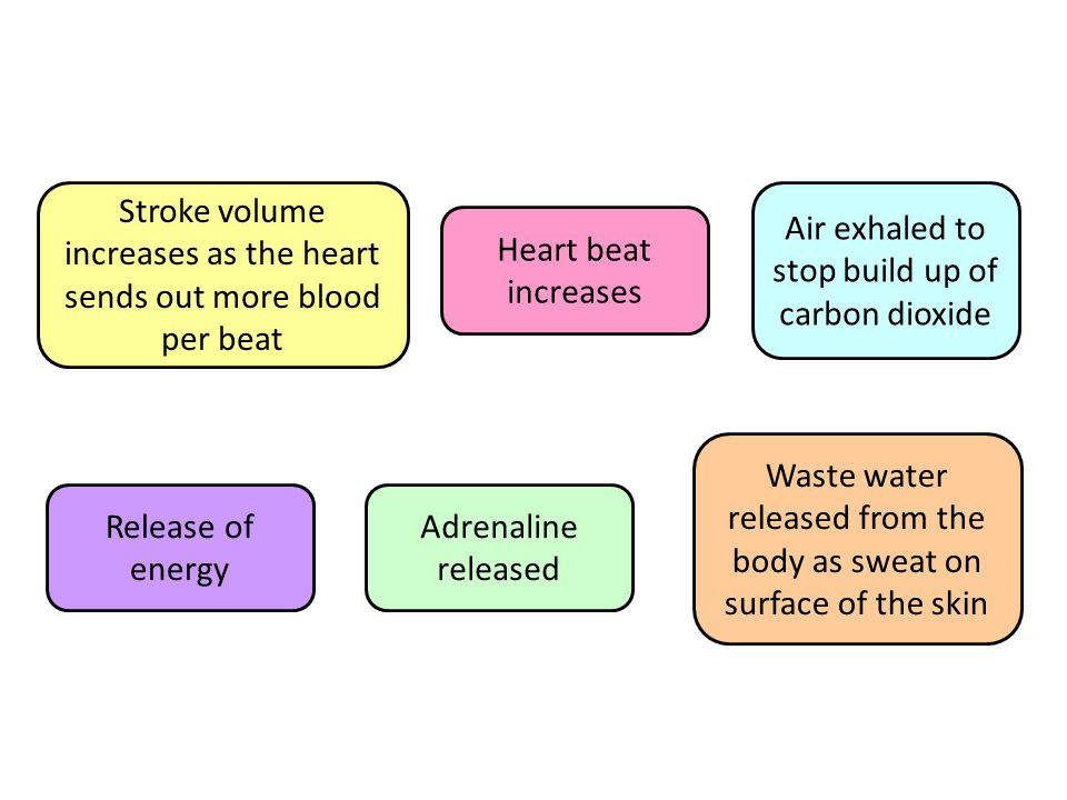 Stroke volume increases as the heart sends out more blood per beat