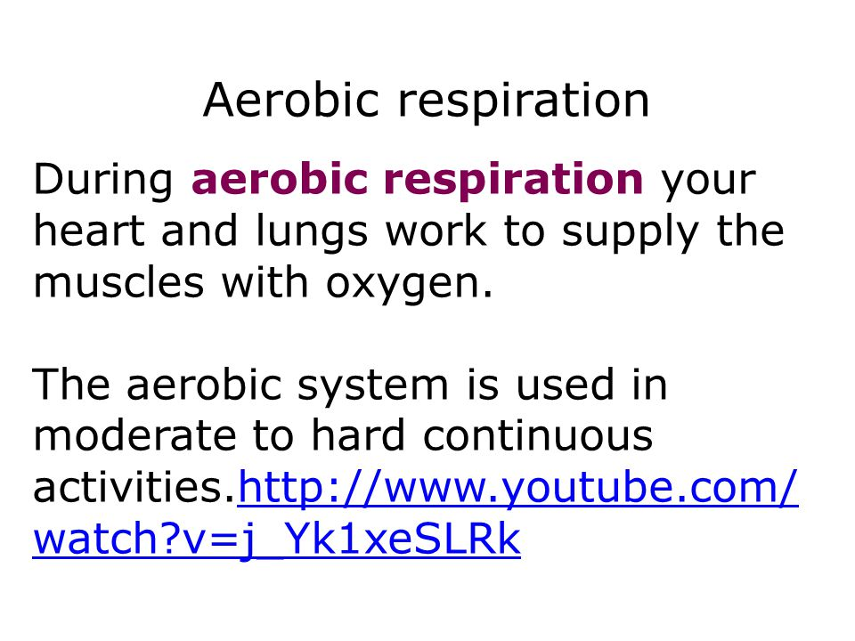 Respiration 8 Aerobic respiration. During aerobic respiration your heart and lungs work to supply the muscles with oxygen.