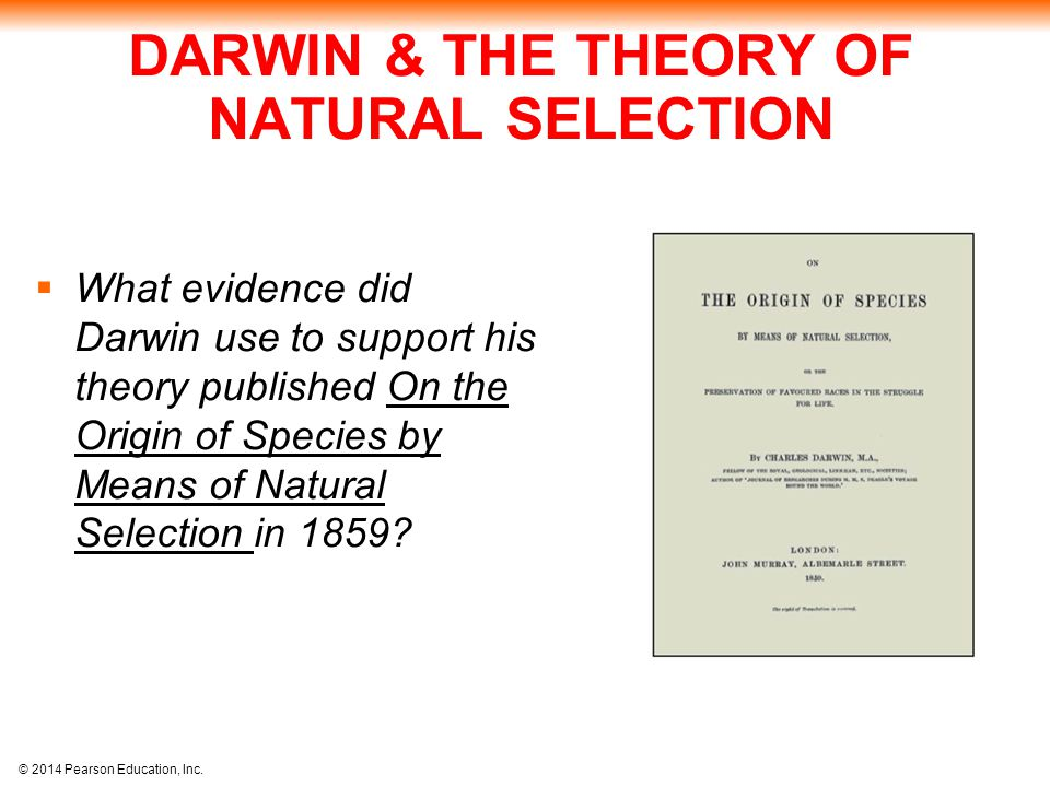 DARWIN & THE THEORY OF NATURAL SELECTION