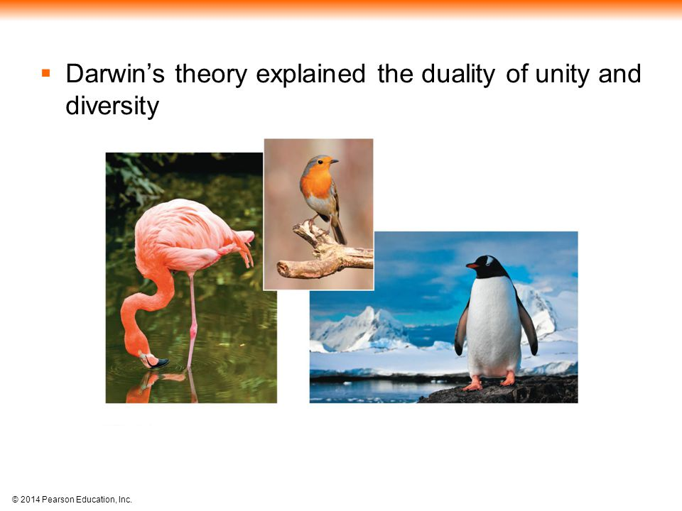 Darwin's theory explained the duality of unity and diversity