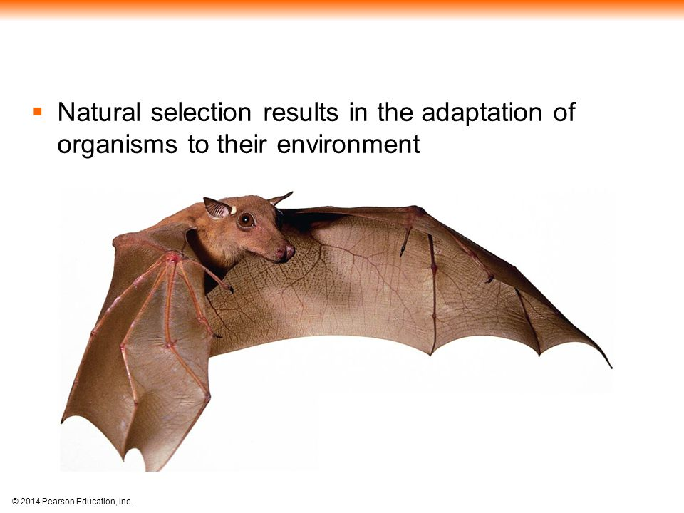 Natural selection results in the adaptation of organisms to their environment