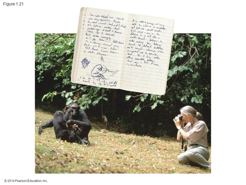 Figure 1.21 Figure 1.21 Jane Goodall collecting qualitative data on chimpanzee behavior