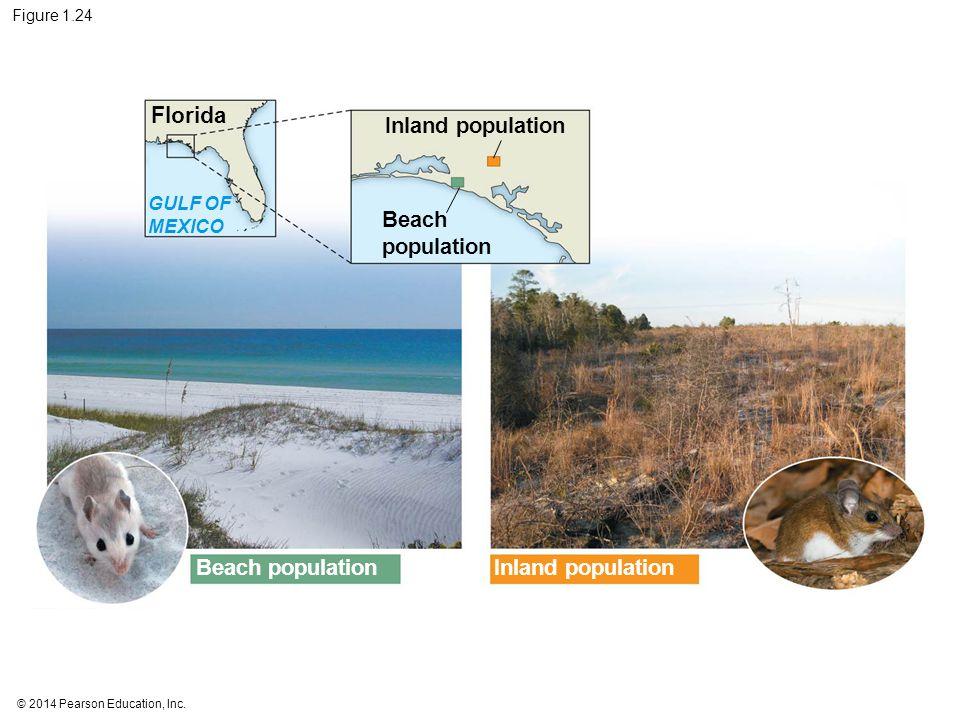 Florida Inland population Beach population Beach population