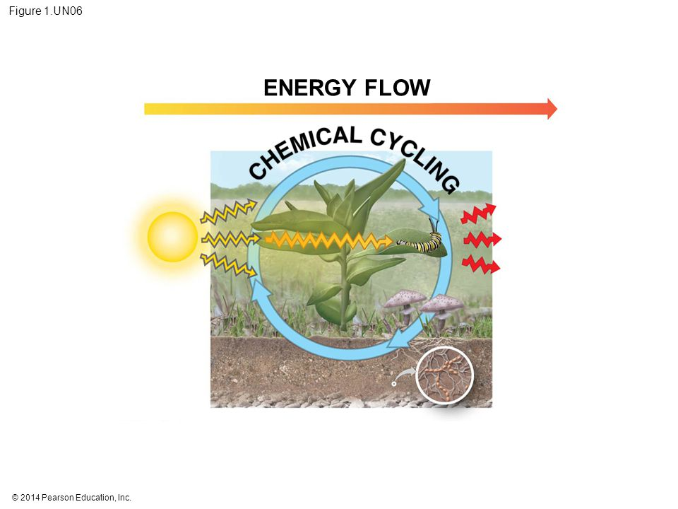 Figure 1.UN06 ENERGY FLOW Figure 1.UN06 Summary of key concepts: energy flow and chemical cycling