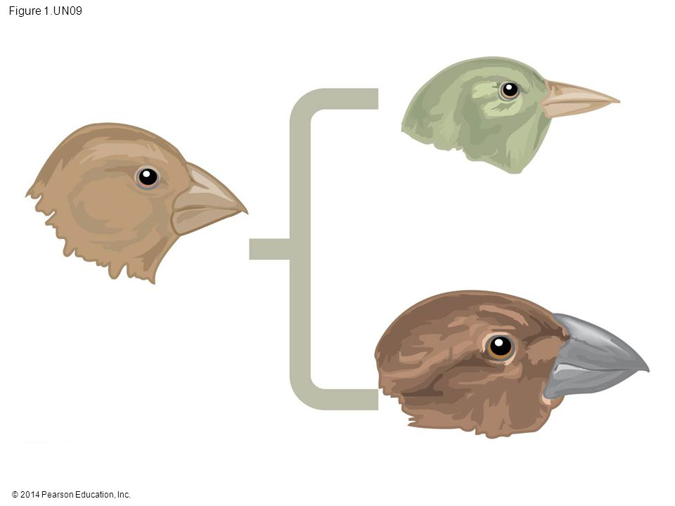 Figure 1.UN09 Figure 1.UN09 Summary of key concepts: evolutionary adaptation
