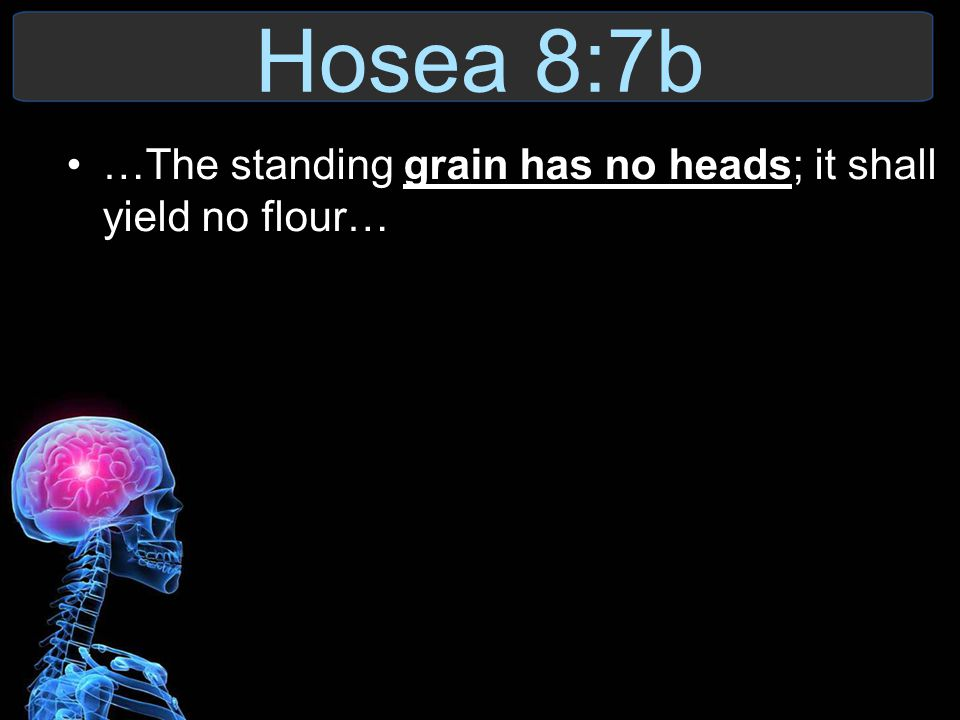 Hosea 8:7b …The standing grain has no heads; it shall yield no flour…
