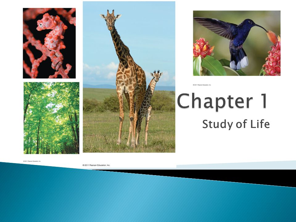 Chapter 1 Study of Life