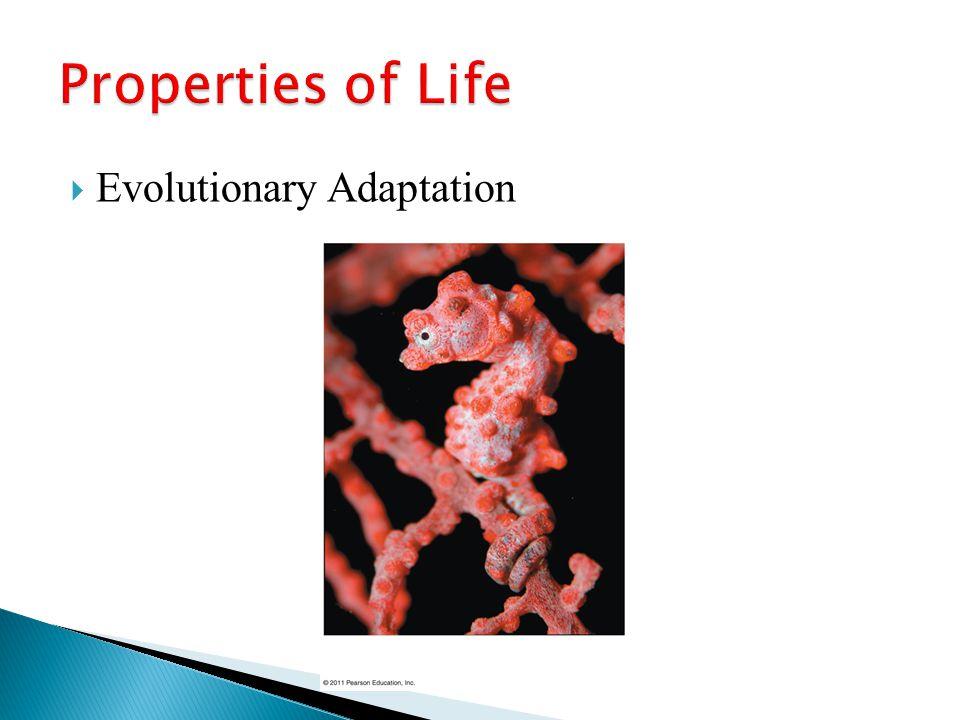 Properties of Life Evolutionary Adaptation