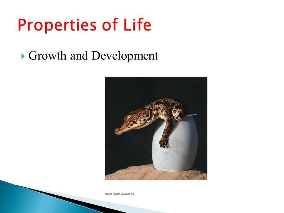 Properties of Life Growth and Development