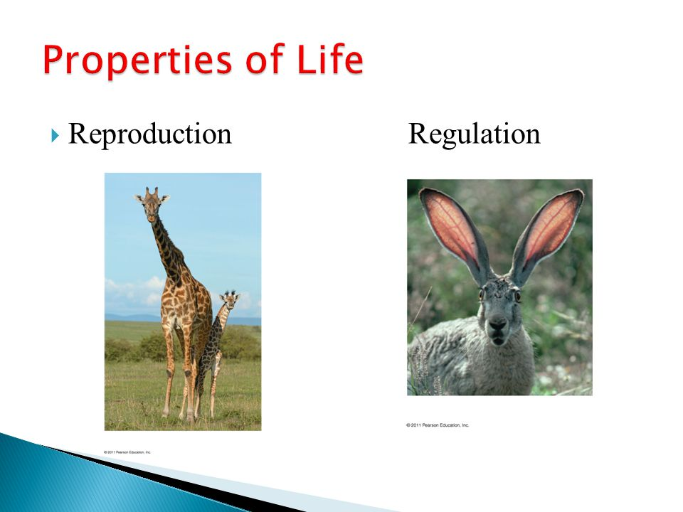 Properties of Life Reproduction Regulation