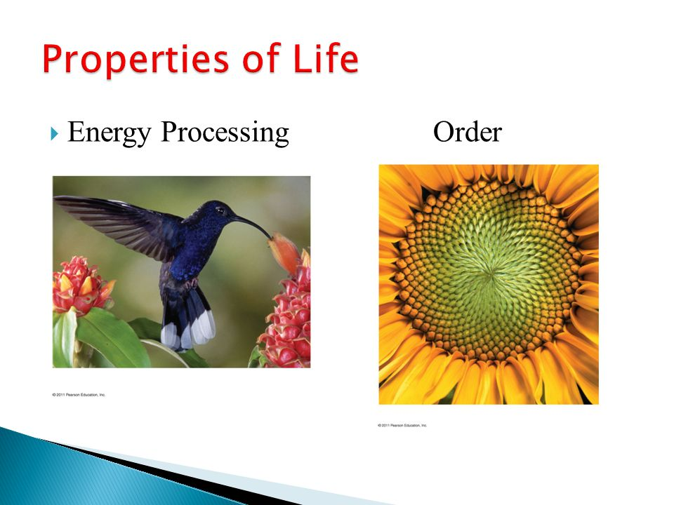 Properties of Life Energy Processing Order