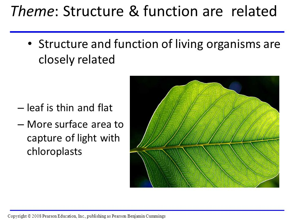Theme: Structure & function are related