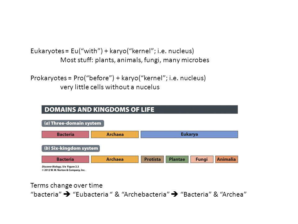 Eukaryotes = Eu( with ) + karyo( kernel ; i.e. nucleus)