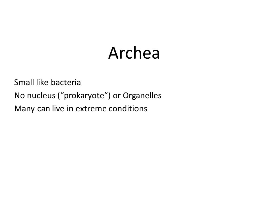 Archea Small like bacteria No nucleus ( prokaryote ) or Organelles
