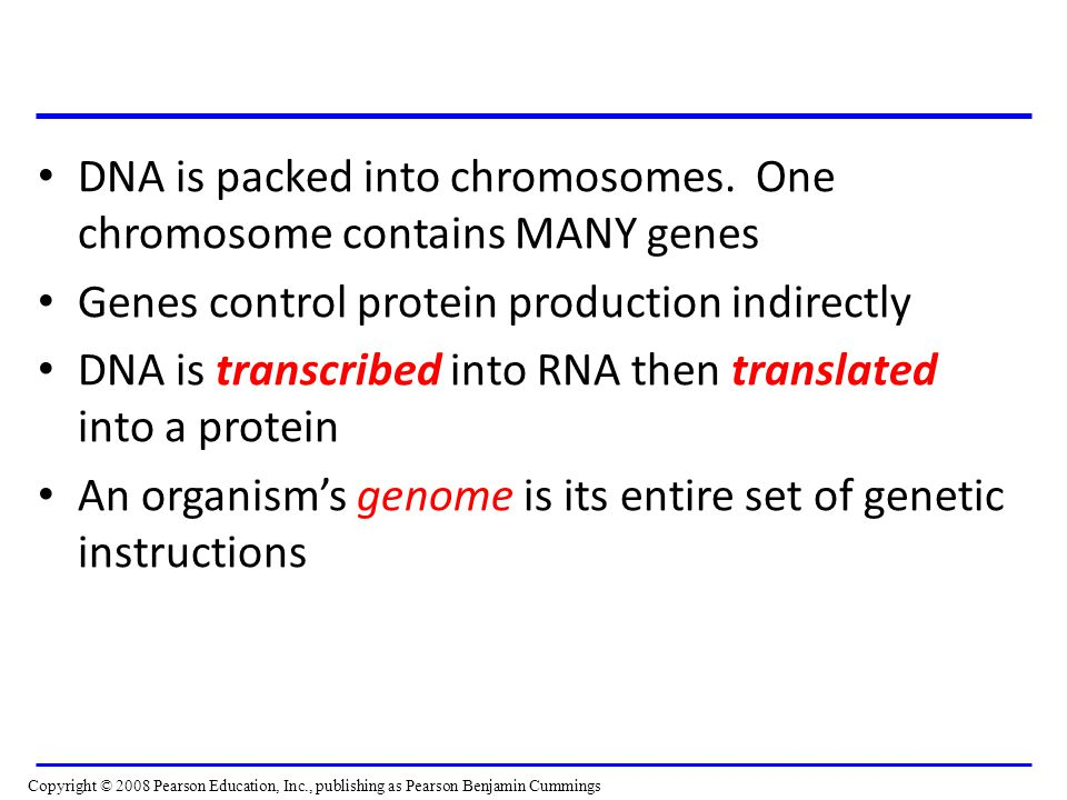 DNA is packed into chromosomes. One chromosome contains MANY genes