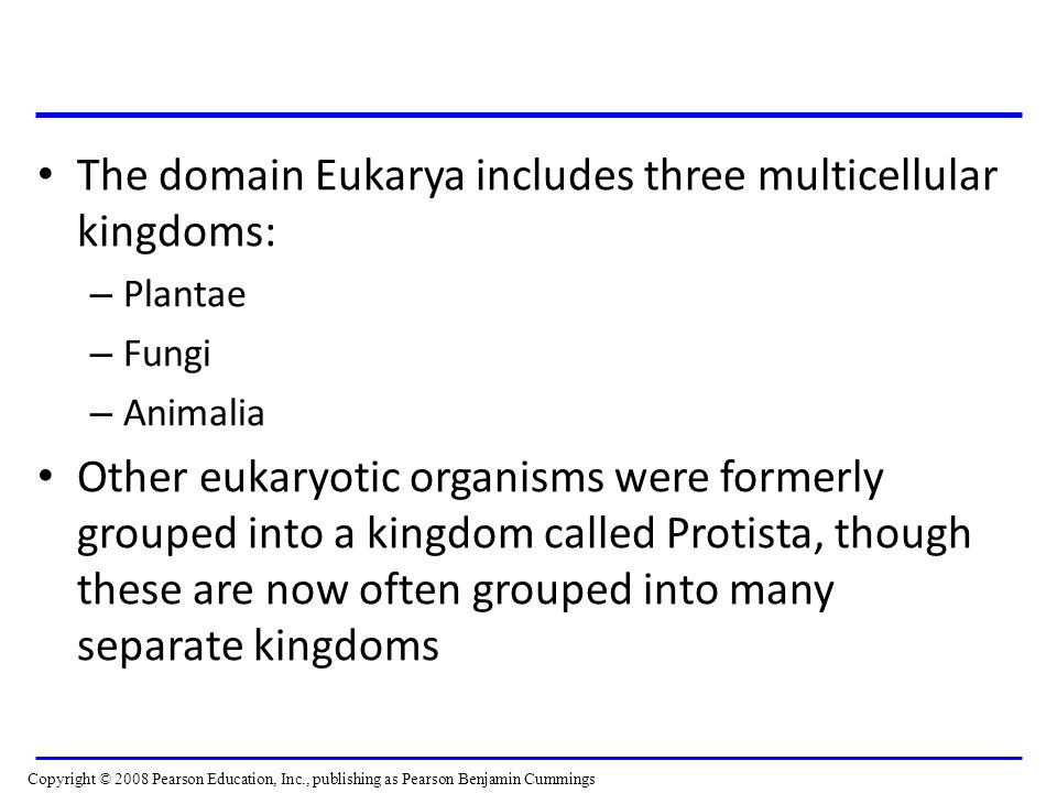 The domain Eukarya includes three multicellular kingdoms: