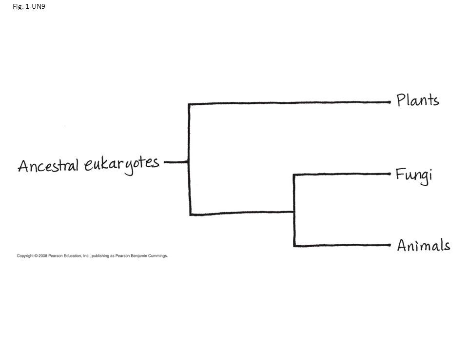 Fig. 1-UN9