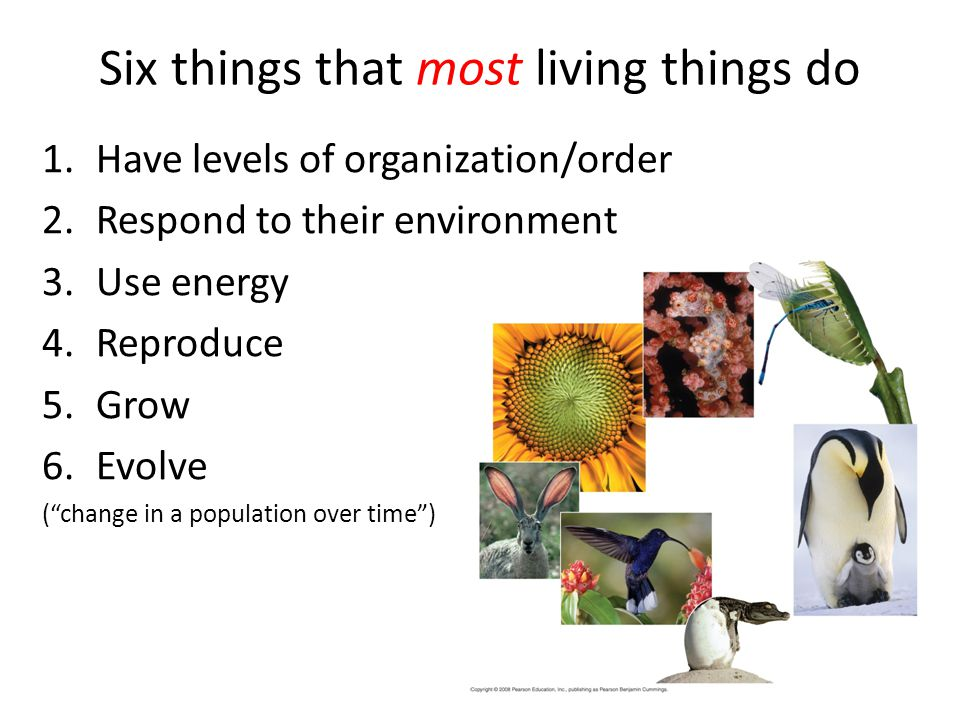 Six things that most living things do