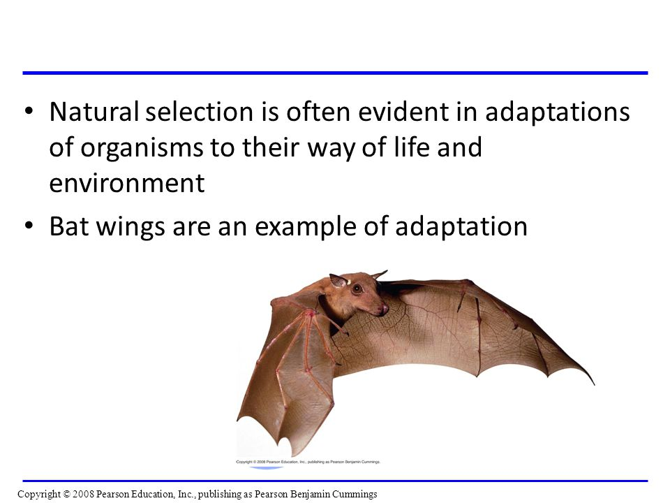 Bat wings are an example of adaptation